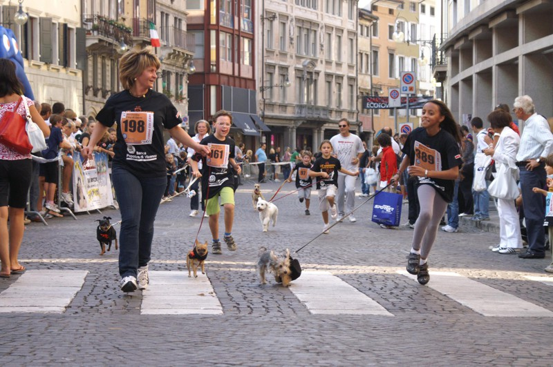 Dog Race SCHESIR – FORMEVET