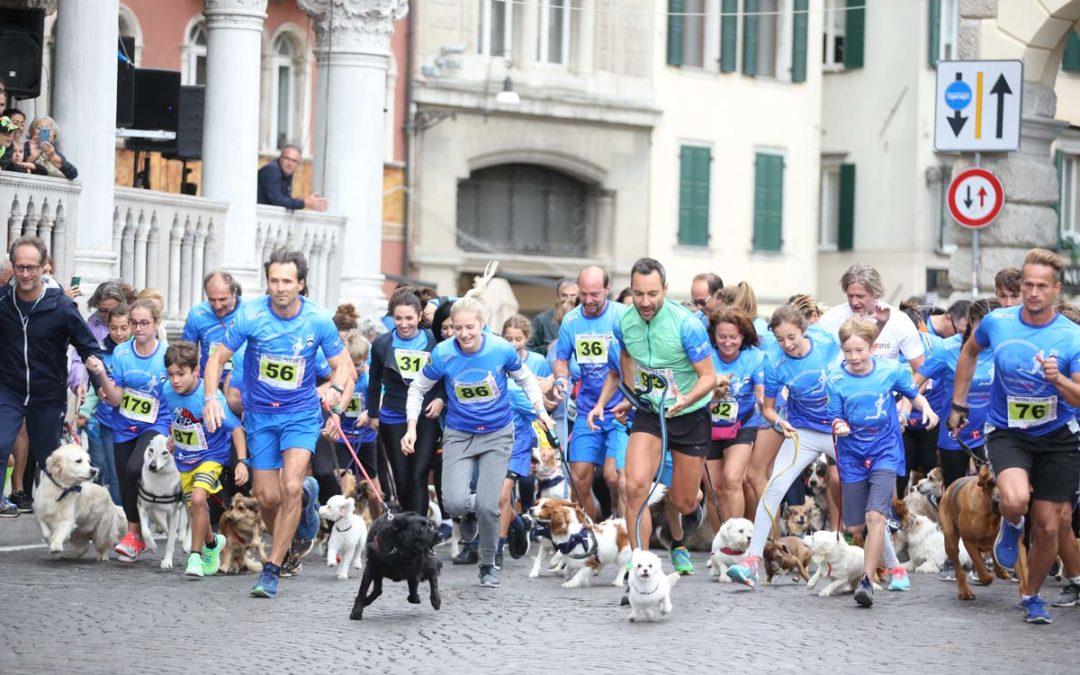 Dog Race SCHESIR